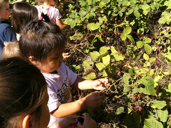 Berry Picking - Chid Care