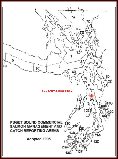 Puget Sound Commercial Salmon Management and Catch Reporting Areas